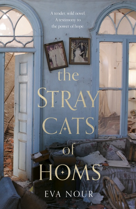 The Stray cats of Homs